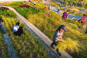 Zaniedbany dach uniwersytetu przeszedł metamorfozę. Teraz to ekologiczna farma i przestrzeń do spotkań