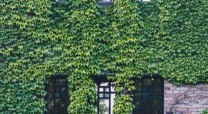 Ogrody wertykalne - zielony trend na fali