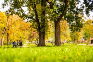 Zaprojektuj Park Edukacji Ekologicznej w Bielsku-Białej