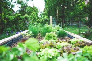 Przy gdańskich przedszkolach powstaną ogrody warzywne i zielone sale