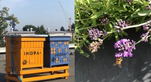 Na dachu gdańskiego biurowca zamieszkały pszczoły
