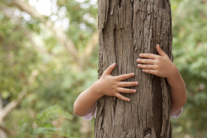 W Beskidzie Sądeckim firma z branży smart home... posadzi las