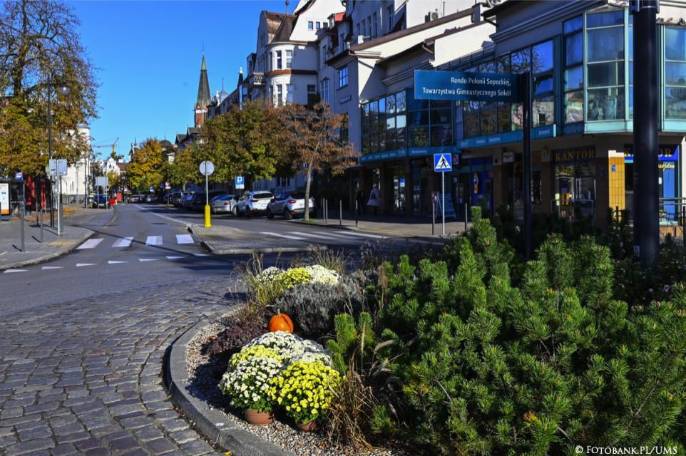 Przestrzeń miejską w Sopocie ozdobiły chryzantemy
