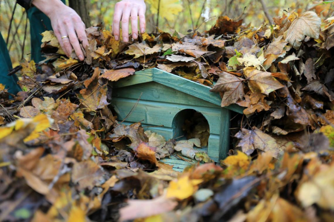 W Toruniu pojawiły się domki dla jeży