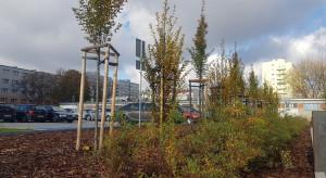Ponad sto nowych drzew i pół tysiąca krzewów posadził w mieście ZZK Wrocław