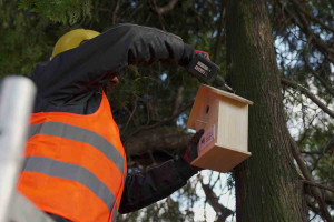 Budki lęgowe dla ptaków trafiły do Parku Ludowego w Lublinie