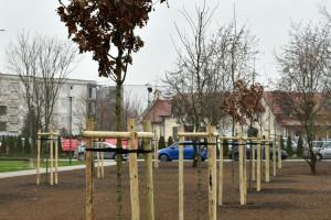 Zielony Poznań. Pierwsze drzewa za wyborczą frekwencję ozdobiły Ławicę i Strzeszyn