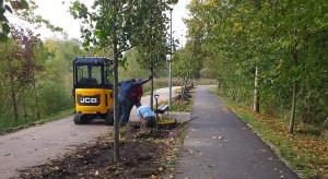 Zielony Olsztyn. W tym roku w mieście pojawiło prawie 280 nowych drzew