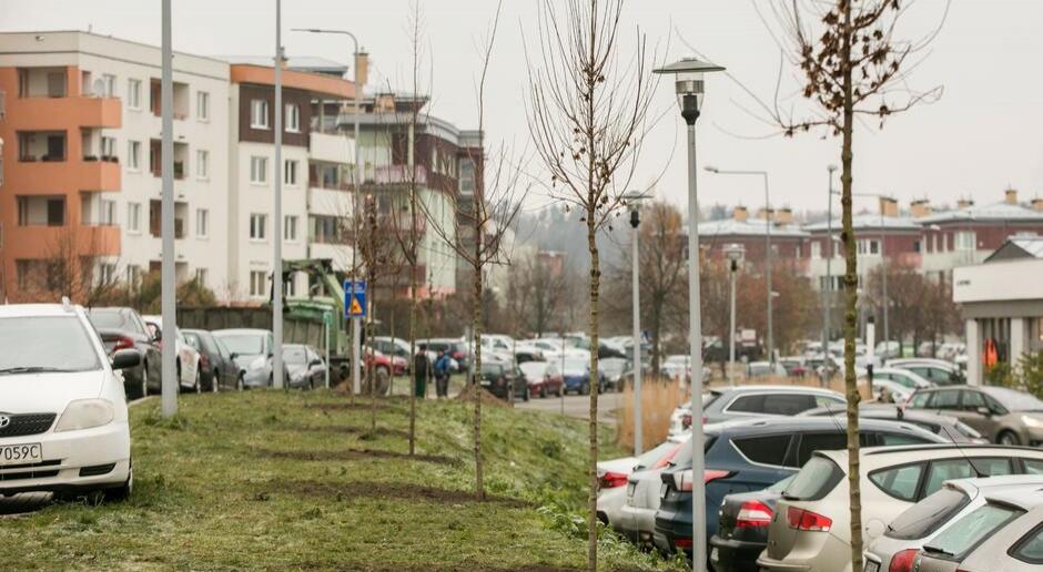 Nowe drzewa, krzewy i byliny jeszcze w tym roku w Gdańsku