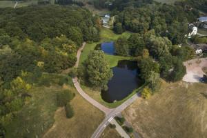 Drzewa w mieście. Zielona infrastruktura w Bydgoszczy w liczbach