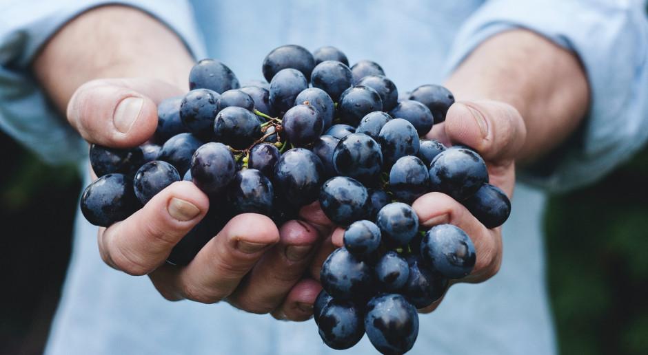 W Tarnowie powstanie miejska winnica