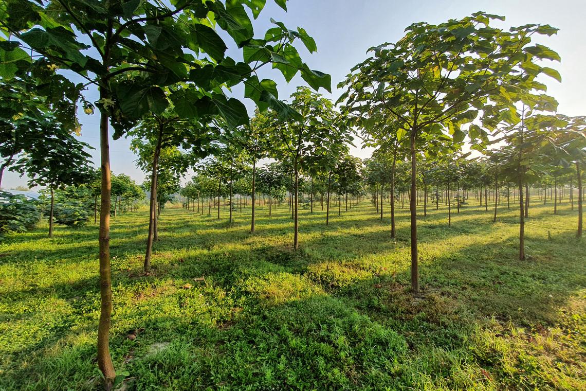 Meble przyszłości będą z drzew tlenowych?