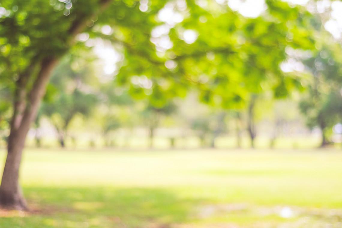 Krokusy zakwitły. Łódzki Ogród Botaniczny otwiera bramy dla odwiedzających