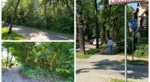 Znamy projektanta parku, który powstanie w gdyńskim Orłowskie