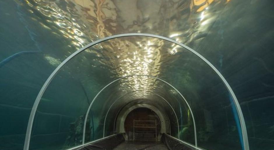 Prace w Orientarium w Łodzi dobiegają końca. Podwodny tunel został już wypełniony wodą