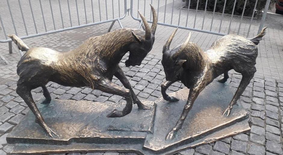 Koziołki powróciły na Plac Kolegiacki w Poznaniu