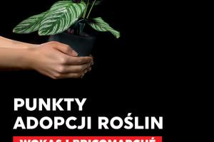 Punkty Adopcji Roślin powstały w sześciu miastach w Polsce