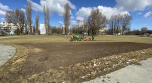 Zielona Łódź. W mieście powstaną nowe łąki kwietne