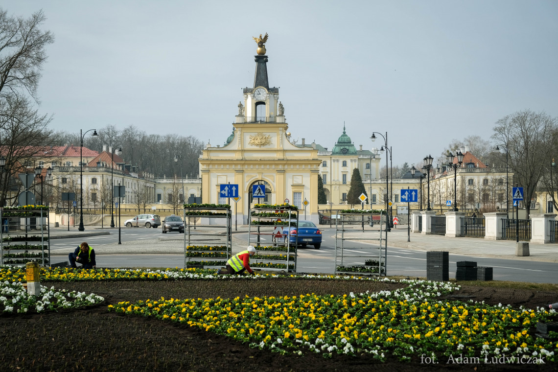 Zielony Białystok. W mieście trwa wiosenne sadzenie kwiatów