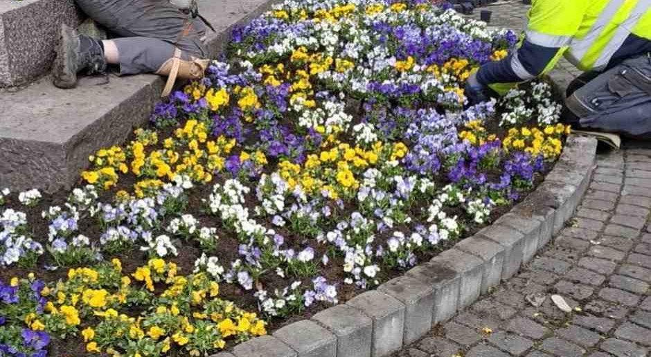 Wielkie sadzenie w Tychach. Miasto w kwiatach