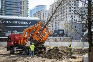 W Warszawie ruszyła ogromna akcja przesadzania drzew