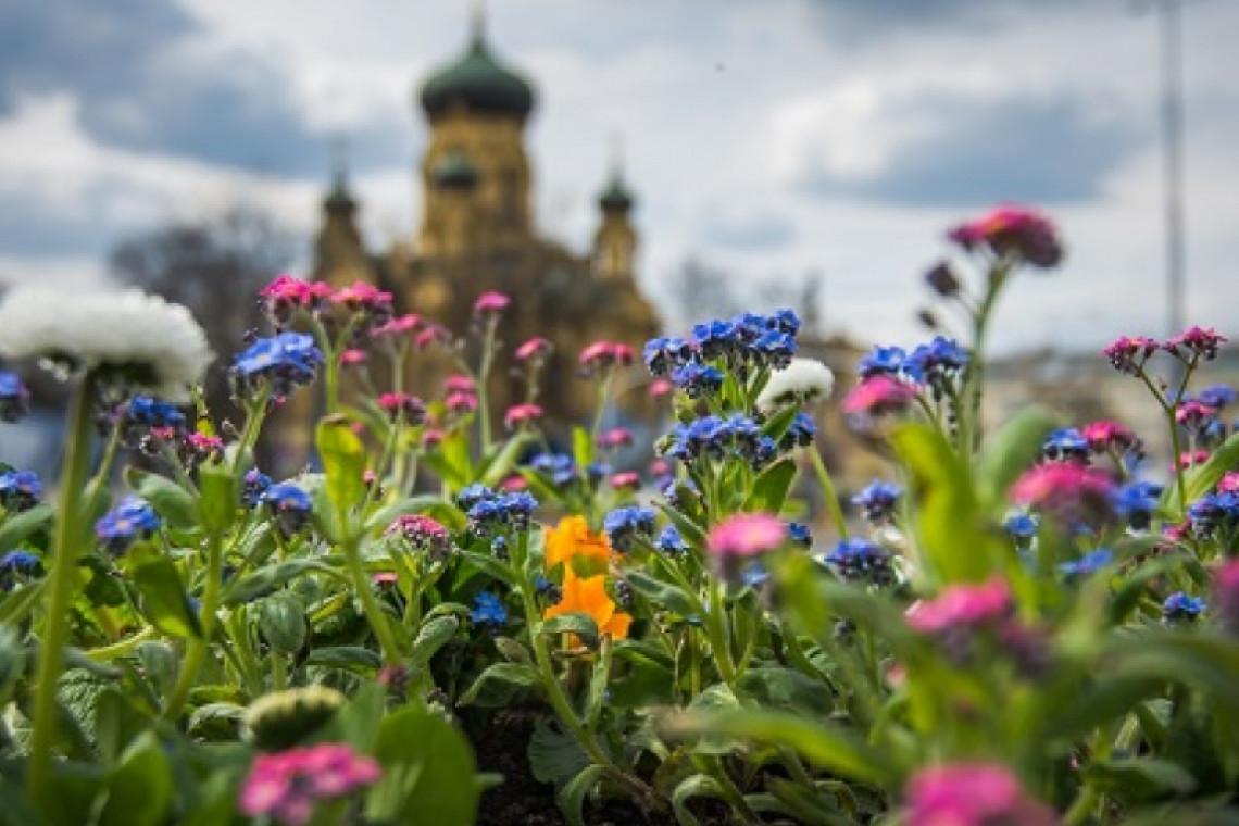 Ponad 700 tysięcy kwiatów zakwitnie w Warszawie