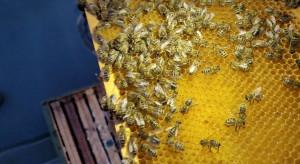 Na dachu IKEA Janki zamieszkają pszczoły