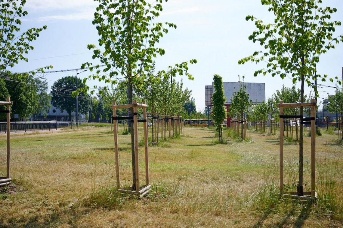 Zielona Łódź. Nowe drzewa pojawią się na głównych dwupasmówkach