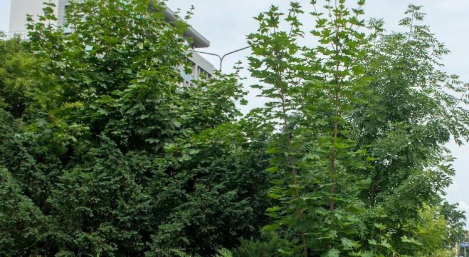 Łódź tworzy zielone skwery