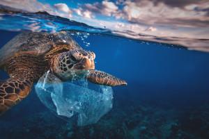 Opakowania z plastiku wydobytego z oceanów. Polska marka pionierem