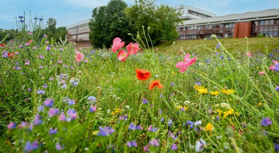 W 2021 roku Łódź zyskała aż 10 nowych łąk kwietnych