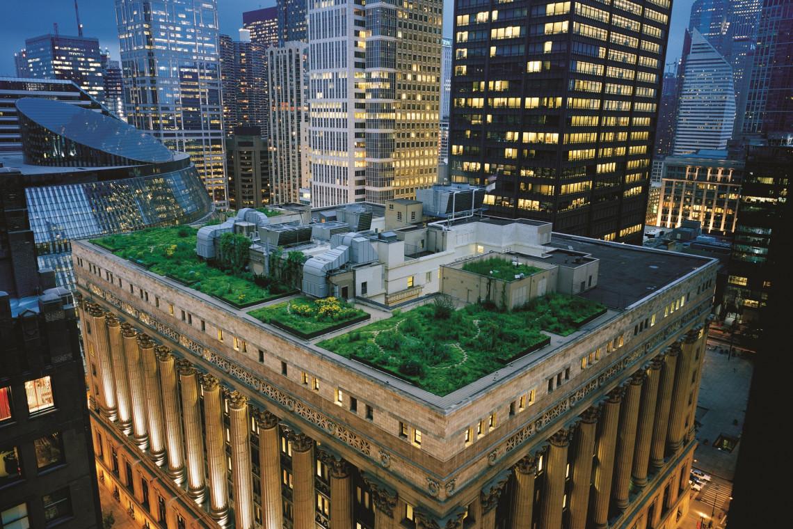 Zielone dachy w miastach. Poznaj ich zalety