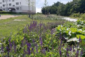 Zielona Gdynia. W mieście pojawił się kolejny park kieszonkowy