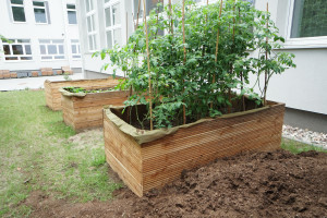 Ogrody społeczne w Gdyni. Jak będzie wyglądał ten na Oksywiu?
