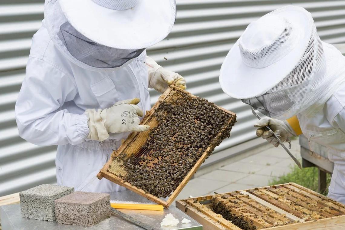 210 litrów miodu zebrano z uli na dachu Urzędu Miasta Gdyni