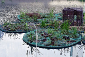 Pływające ogrody. W Poznaniu pojawią się dwa kolejne