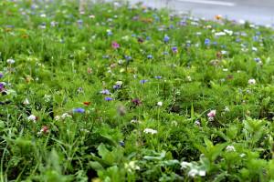 EPP stawia na łąki kwietne zamiast trawników