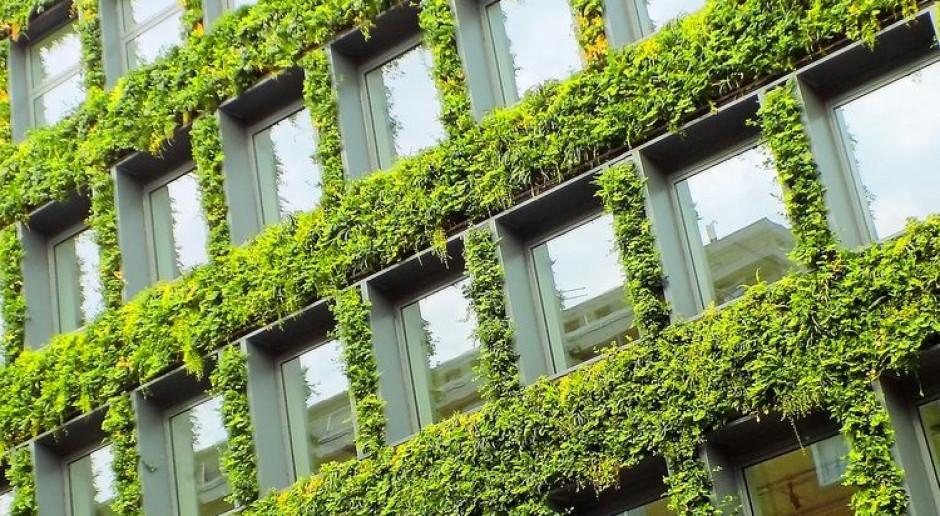 Zielone ściany w Bydgoszczy