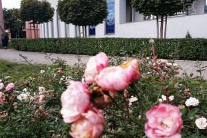 Zielony Lublin. Nowa szata roślinna w krajobrazie miasta