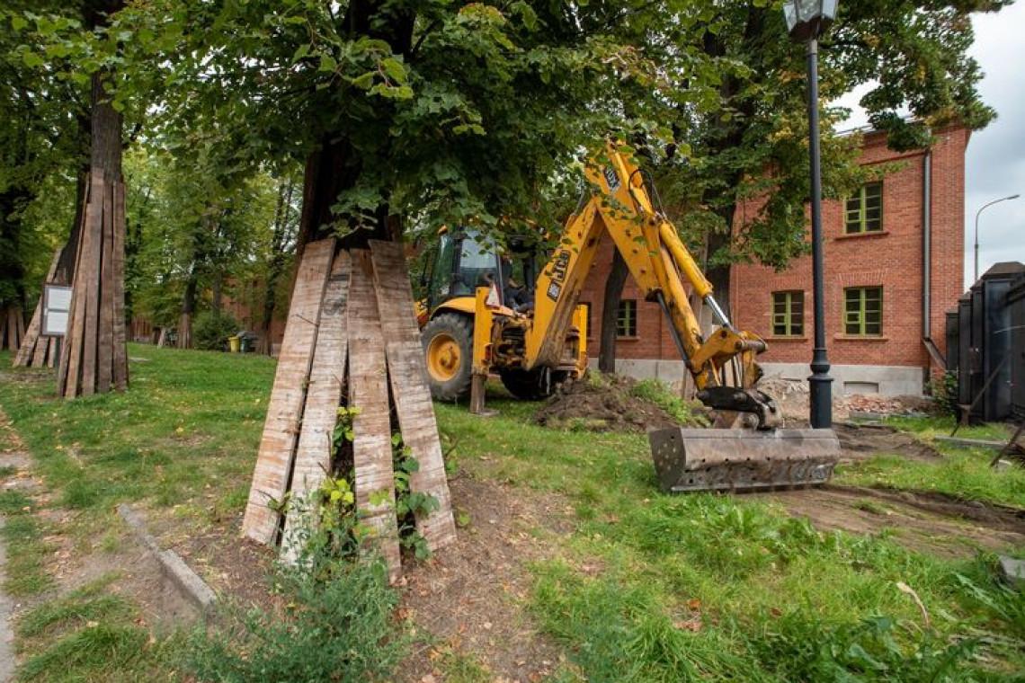 Trwa remont zabytkowej alei lip na Księżym Młynie