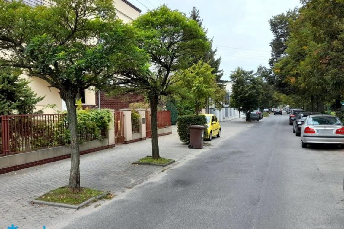 Poznań sadzi kolejne drzewa