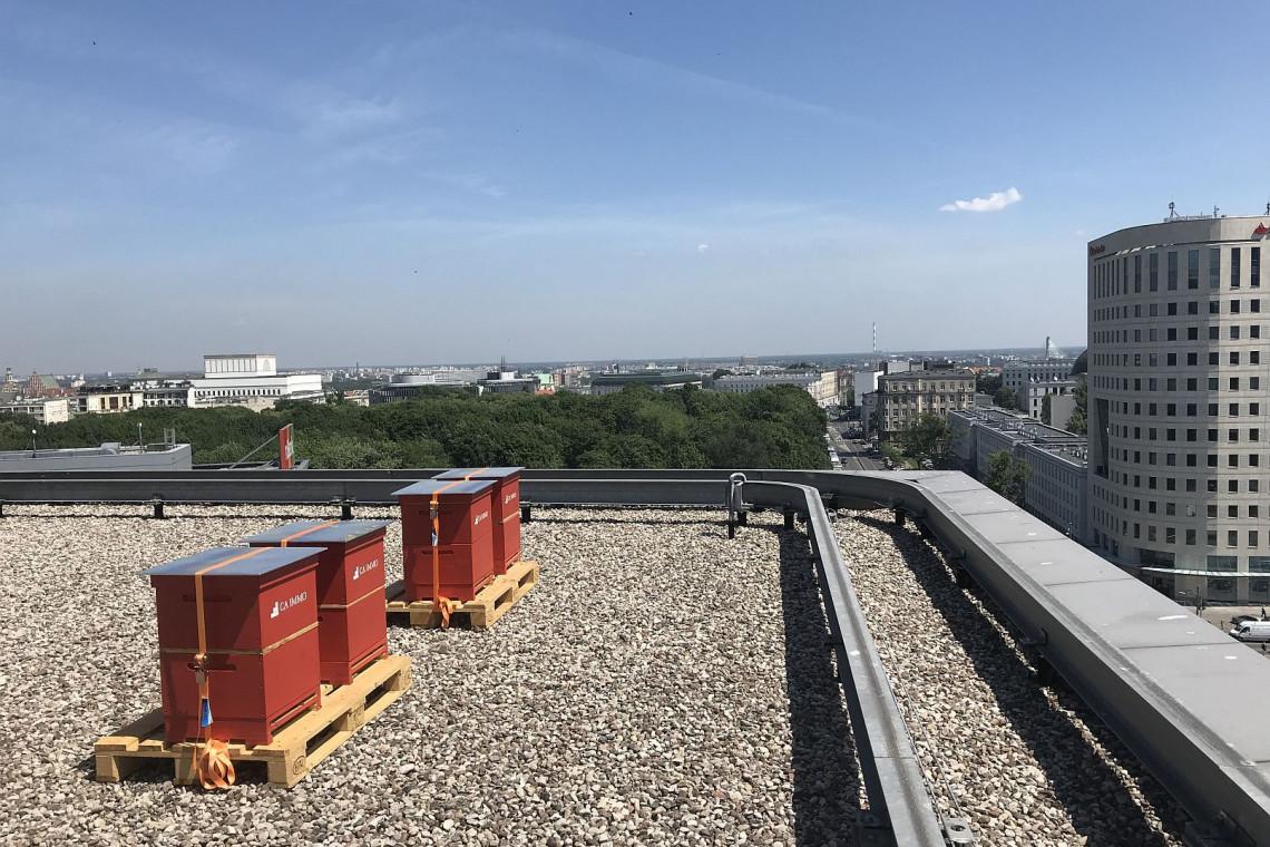 Jak wypada miodobranie z pasieki na dachu budynku Saski Crescent?