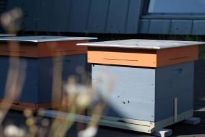 W trosce o środowisko. Na zielonym dachu EC1 w Łodzi stanęły pierwsze ule