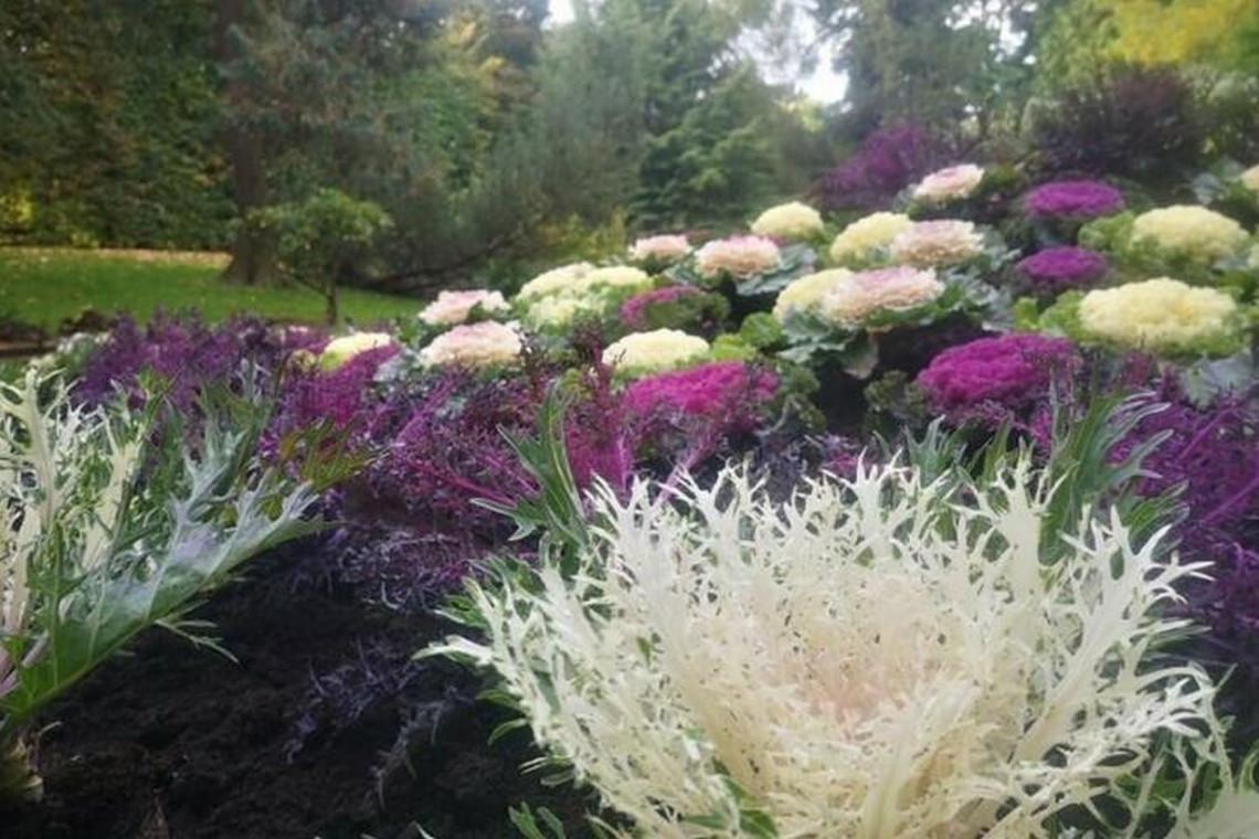 Ponad 4500 nowych kwiatów w parkach i na ulicach Gdańska