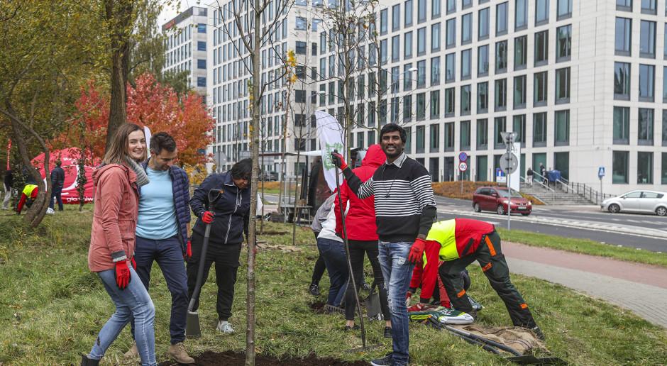 Ponad 50 nowych drzew na skwerze w Katowicach